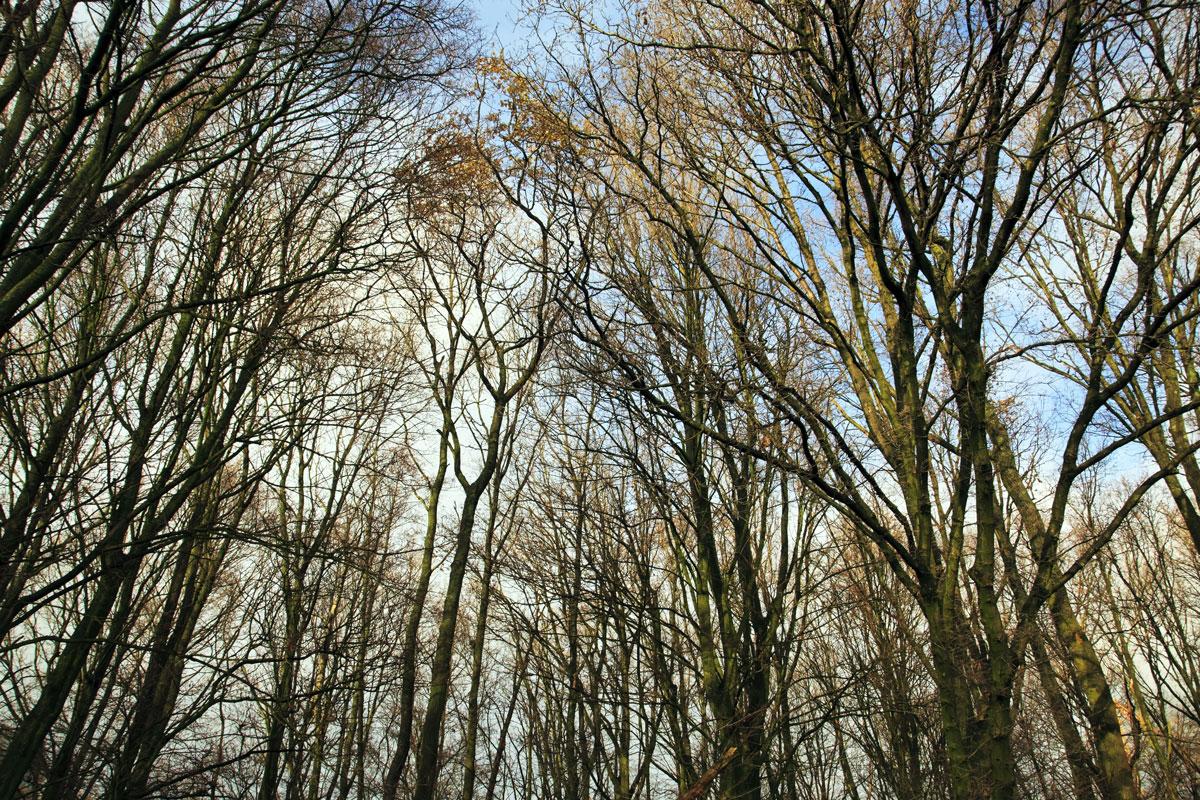 De fabel van het ZZP-bos en de DBA